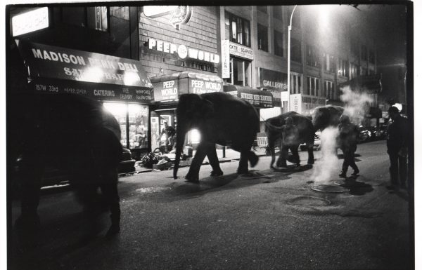 4. Elephants, New York, 1993